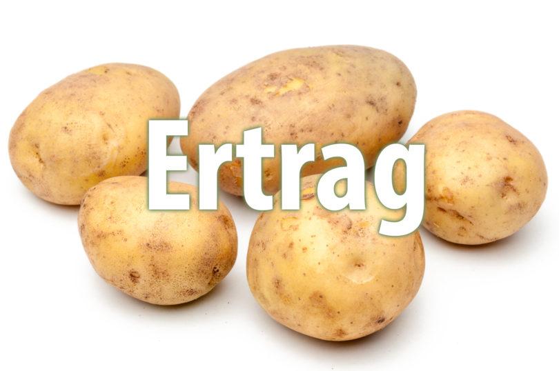 Ertrag von Kartoffelsorten