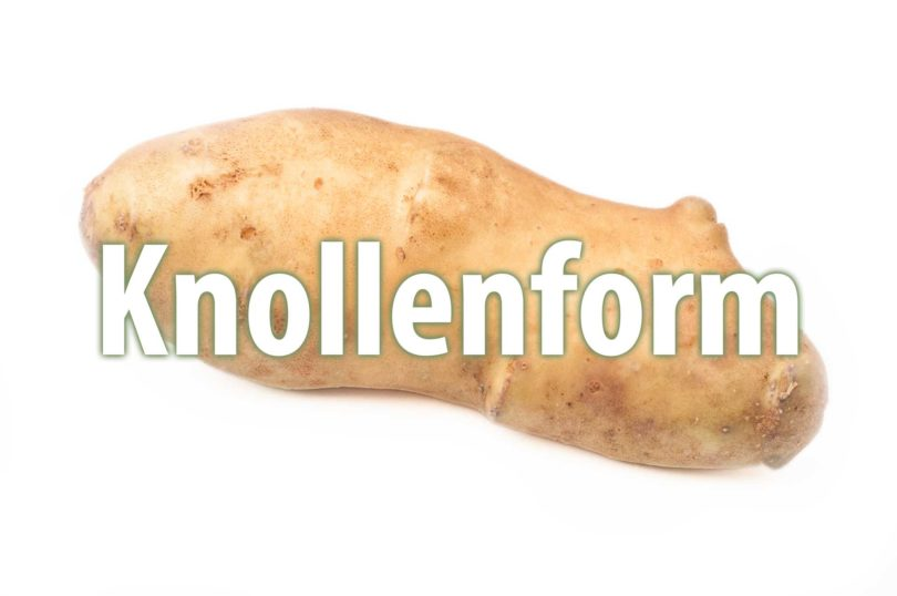Knollenform von Kartoffelsorten
