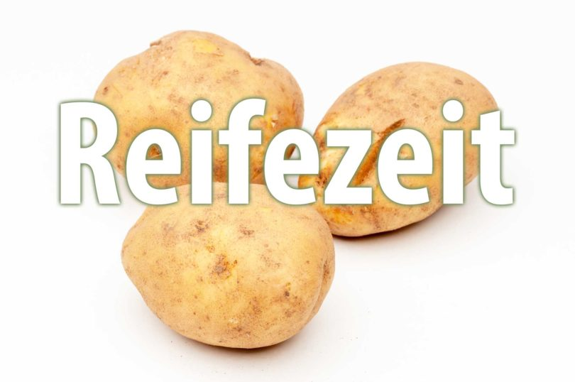 Reifezeit von Kartoffelsorten