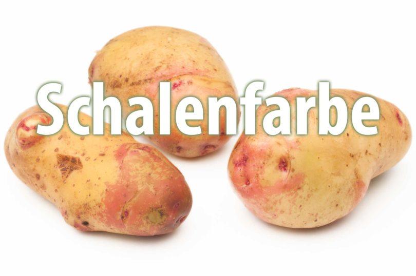 Schalenfarbe von Kartoffelsorten